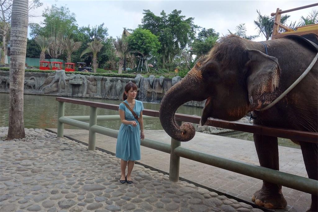 balizoo 赤ちゃん 象 ふれあい