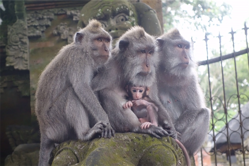 サルの家族 赤ちゃんサル