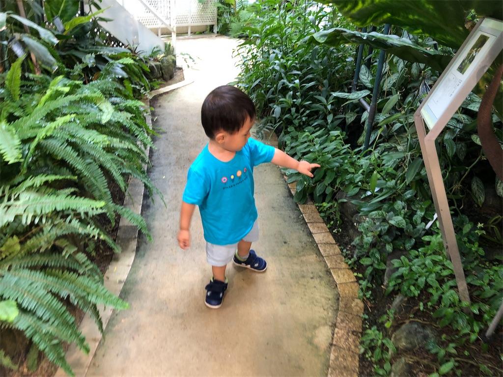 渋谷ふれあい植物センター 子供 遊び