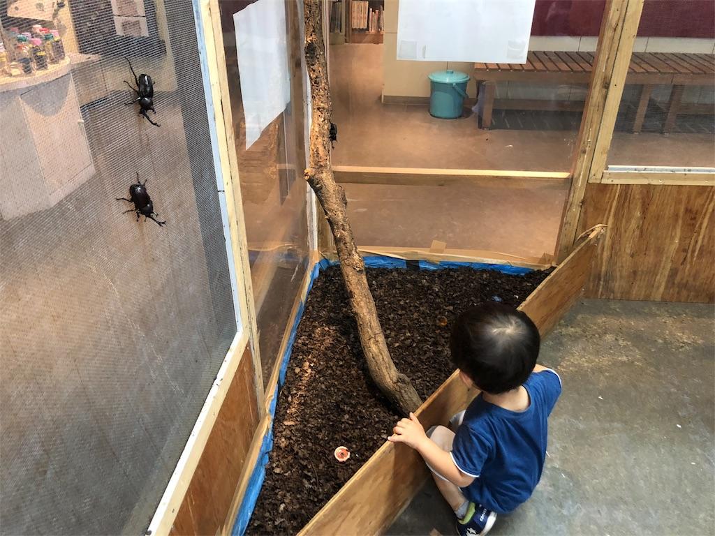 渋谷ふれあい植物センター カブトムシ 子供遊び場