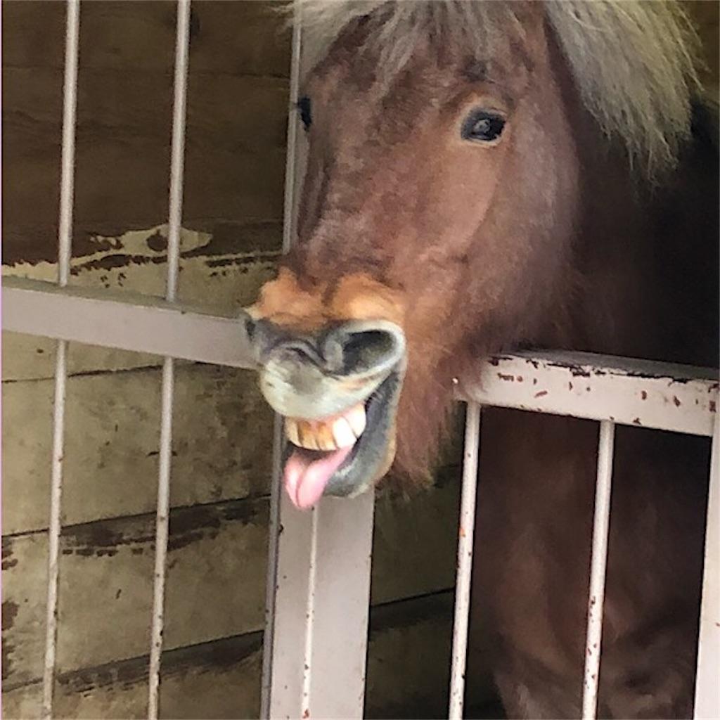 碑文谷公園 馬