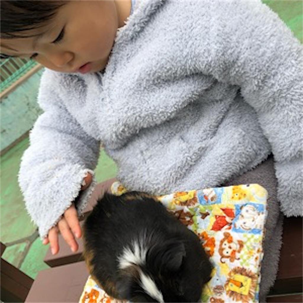 碑文谷公園 小動物ふれあい 子供遊び場 モルモット