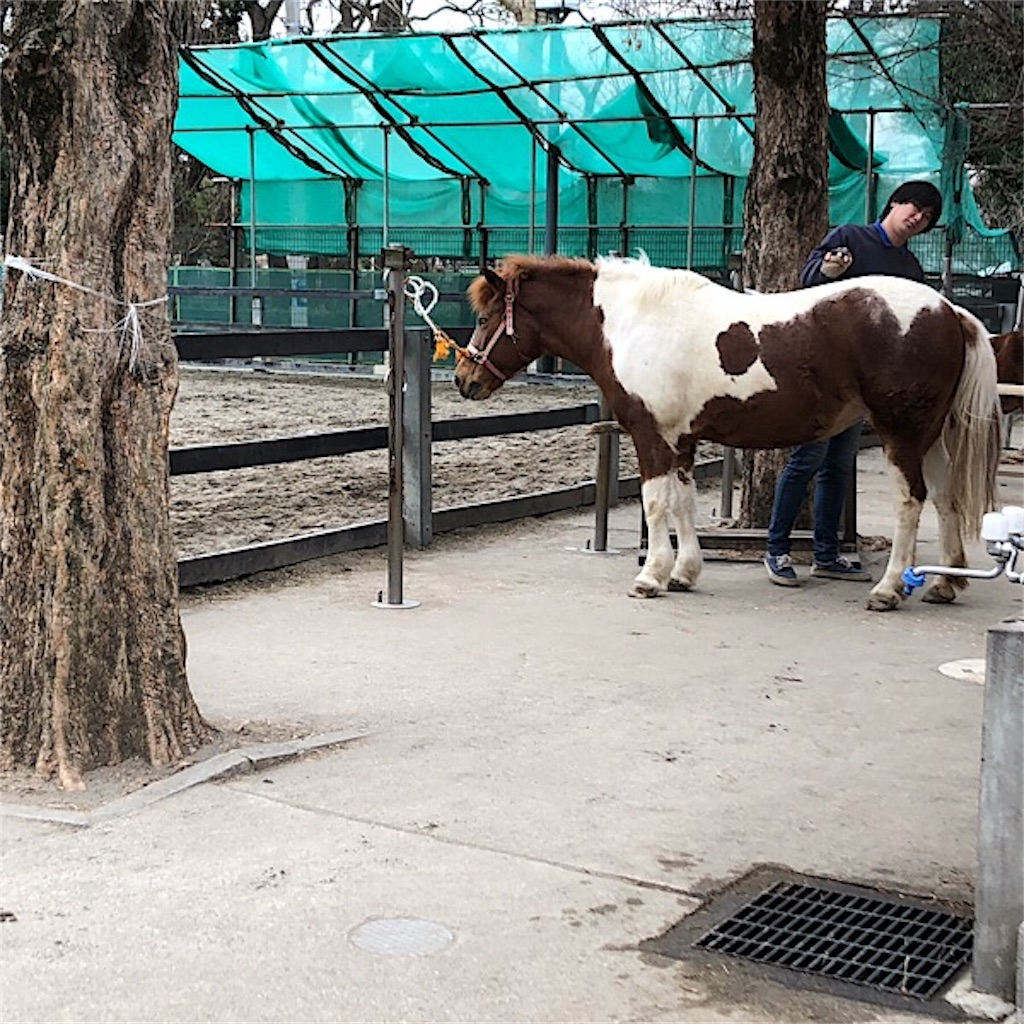 碑文谷公園 子供遊び場 乗馬