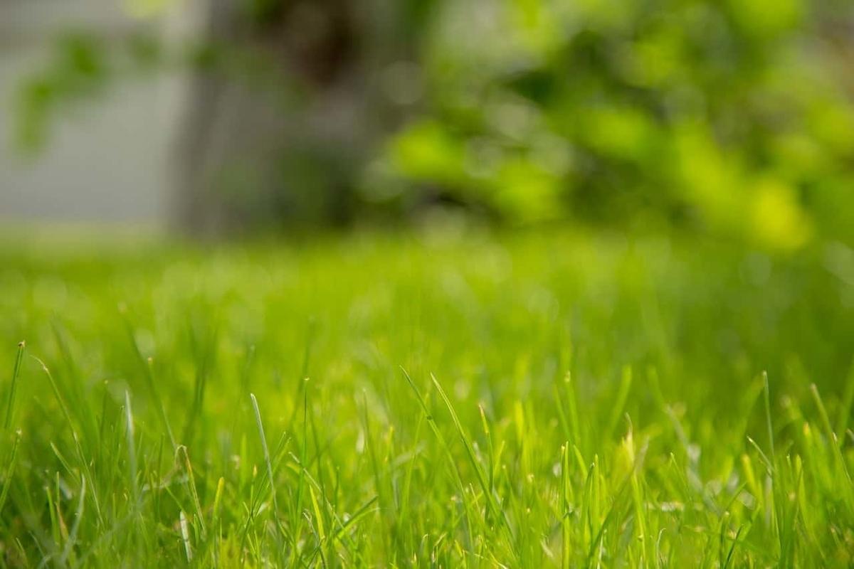 空き地 芝