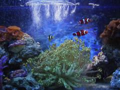 f:id:realblog:20100504143615j:image