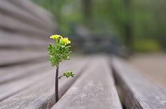 f:id:realblog:20100524025938j:image