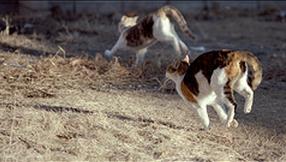f:id:realblog:20101206064707p:image