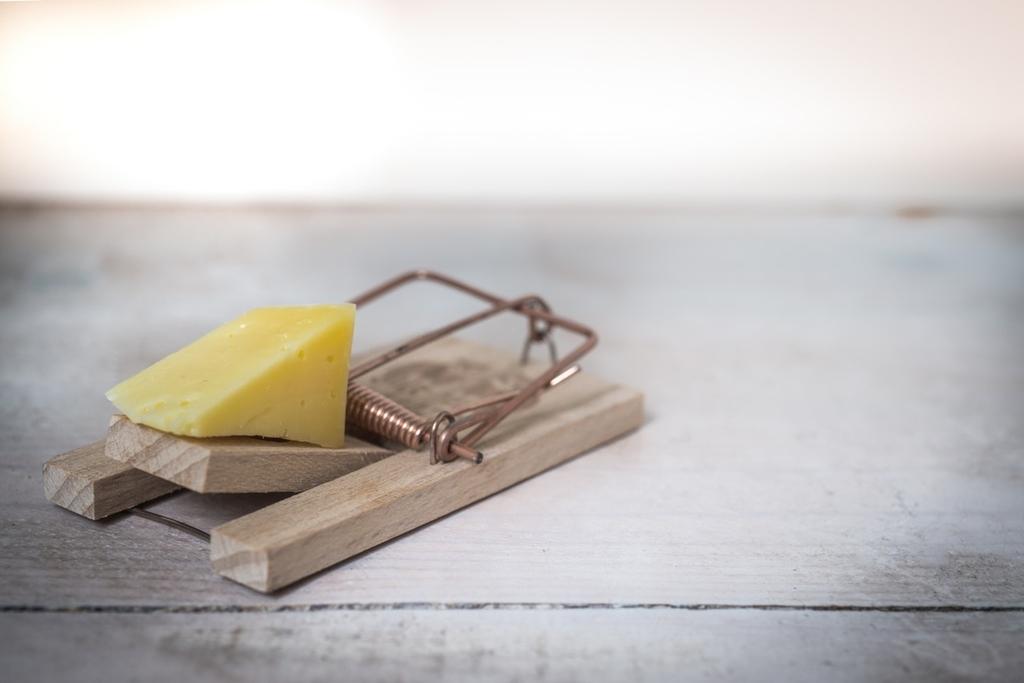 チーズと罠