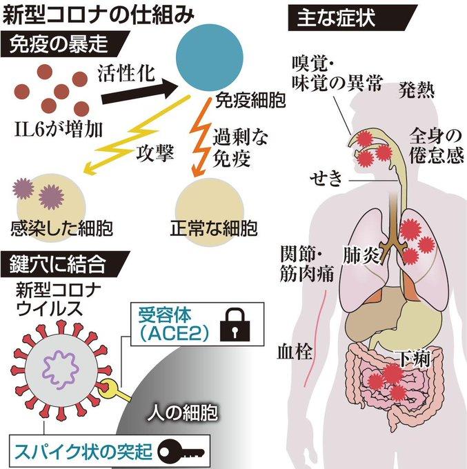 コロナ免疫暴走