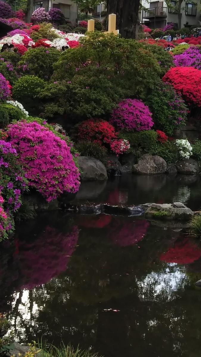 【文京区の根津神社】つつじまつり2019