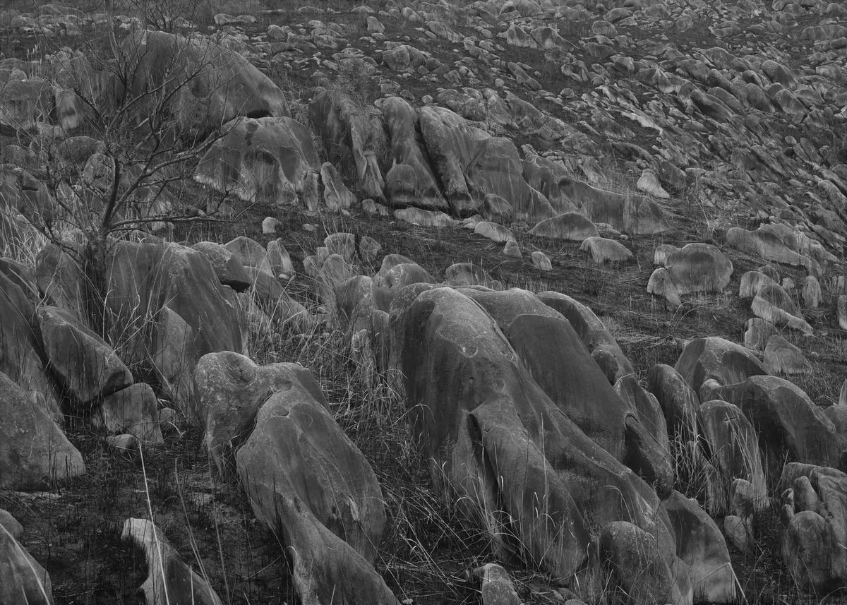 野焼き後の平尾台 福岡県北九州市小倉南区平尾台