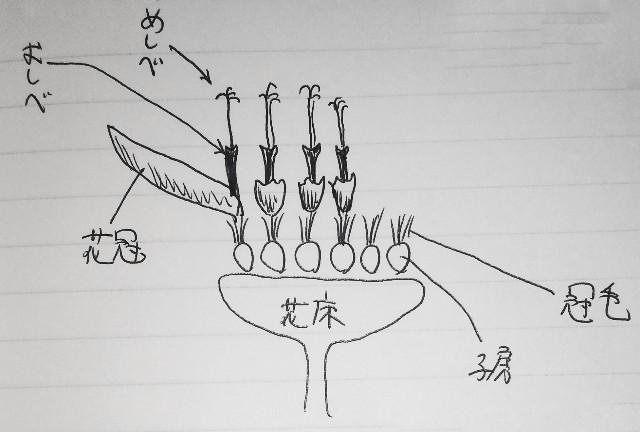 f:id:regenerationderhydra:20200320070113j:image