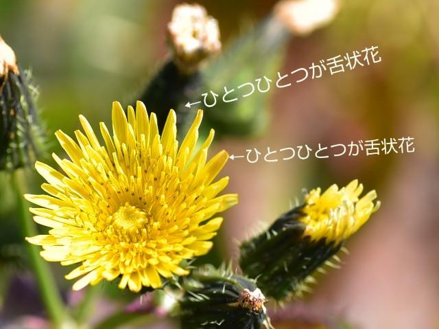f:id:regenerationderhydra:20200320073027j:image