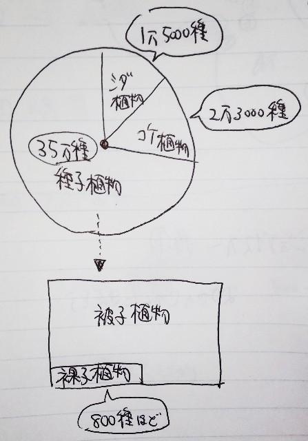 f:id:regenerationderhydra:20200320115609j:image
