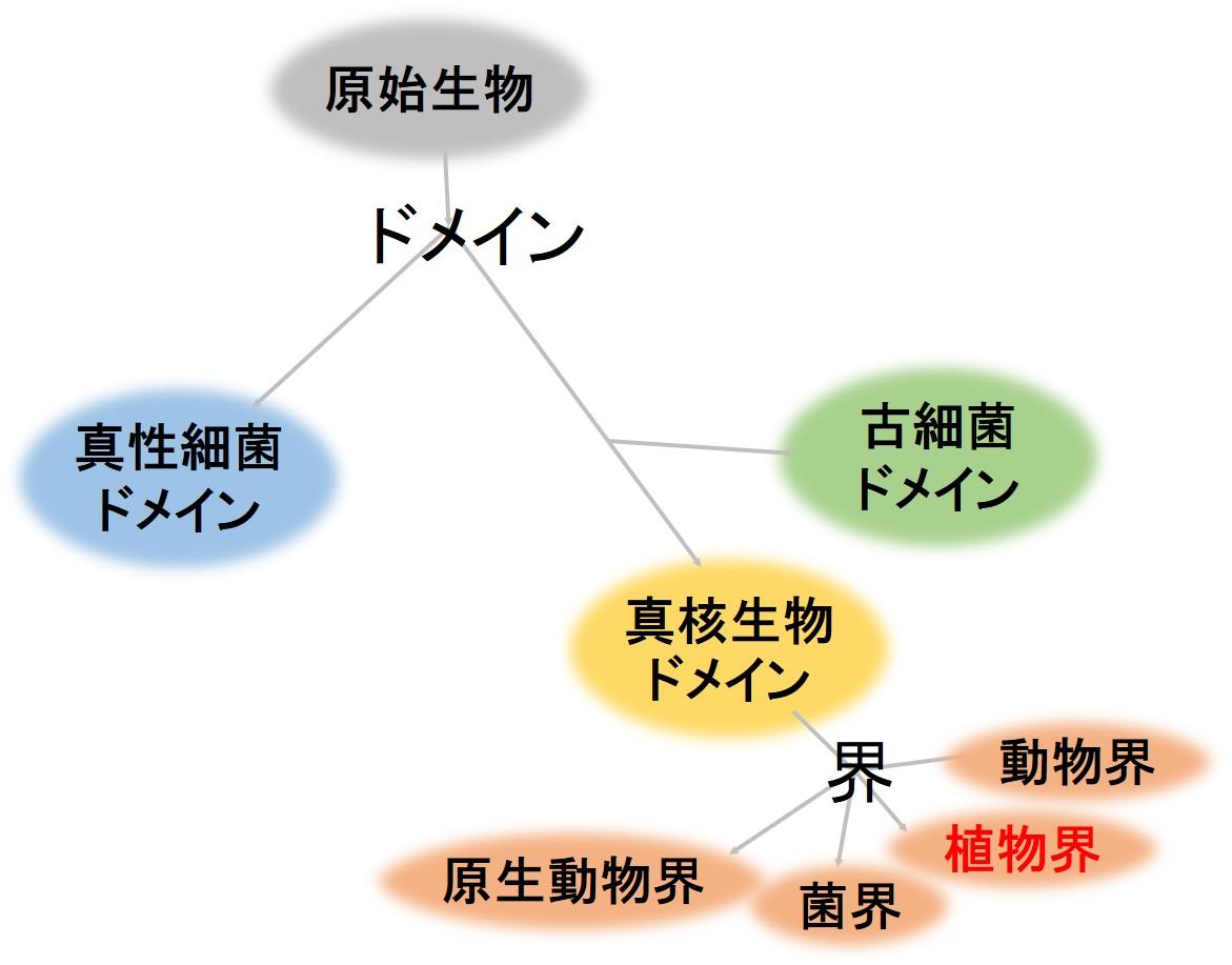 進化系統樹 ドメイン 界