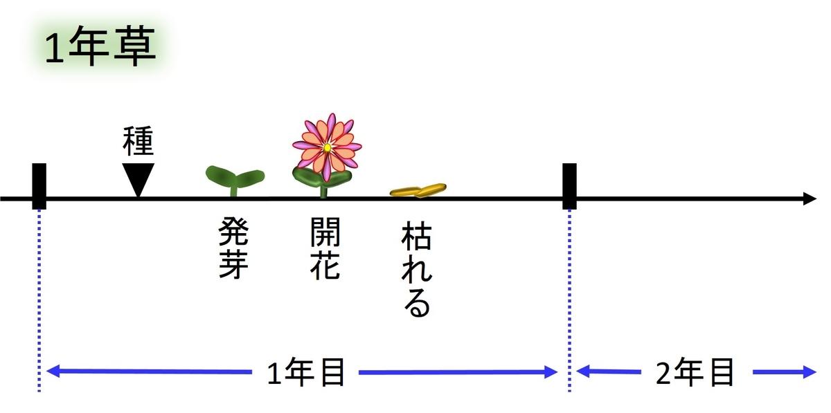 1年生植物の生活環