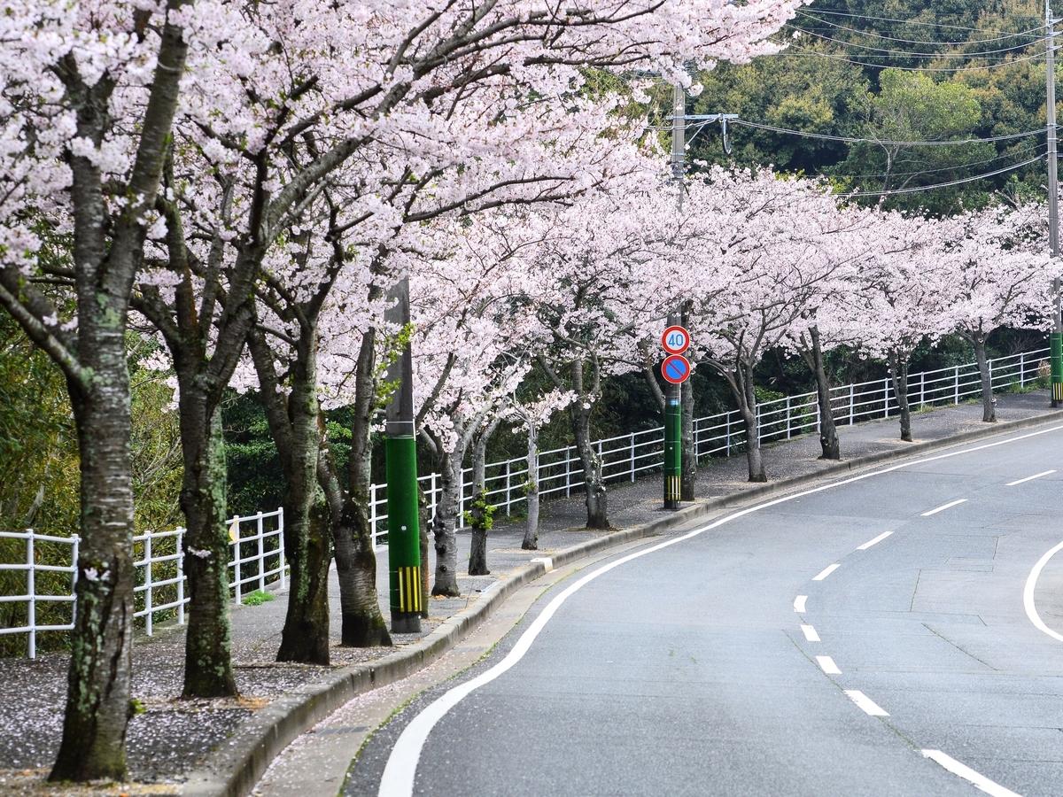 頓田貯水池の桜並木