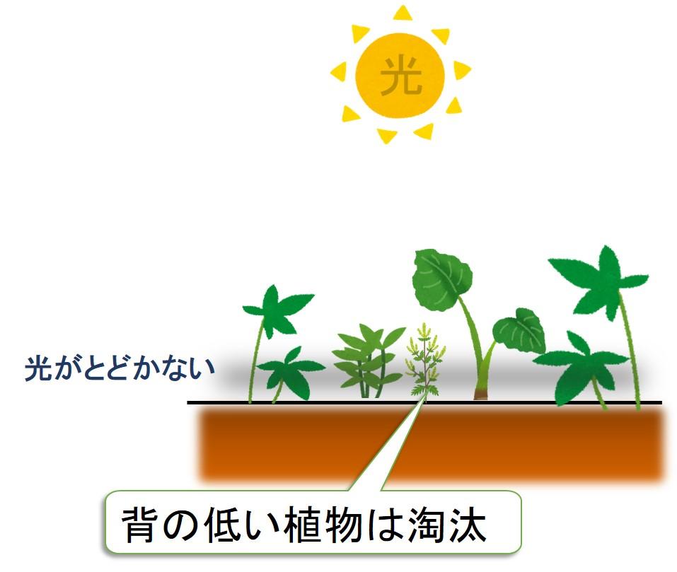 背の低い植物は淘汰