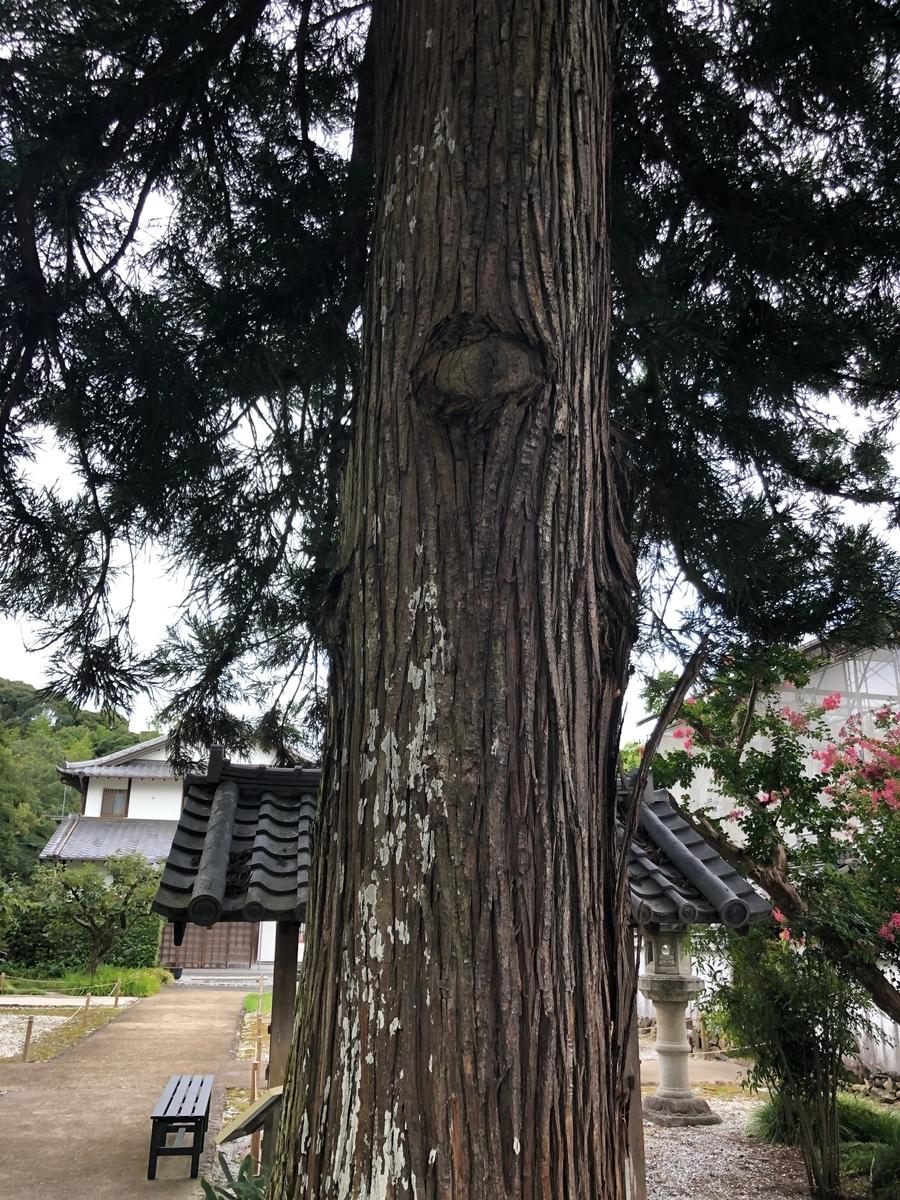 初山宝林寺の猿候杉