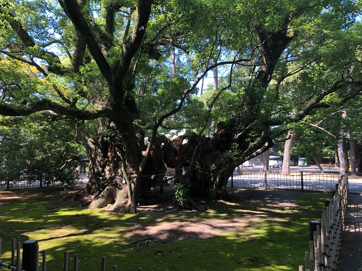浜松八幡宮の雲立楠