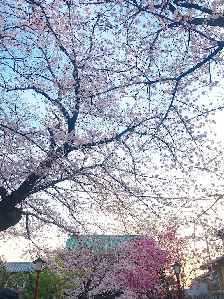 f:id:rei-tokyo:20200322225054j:image