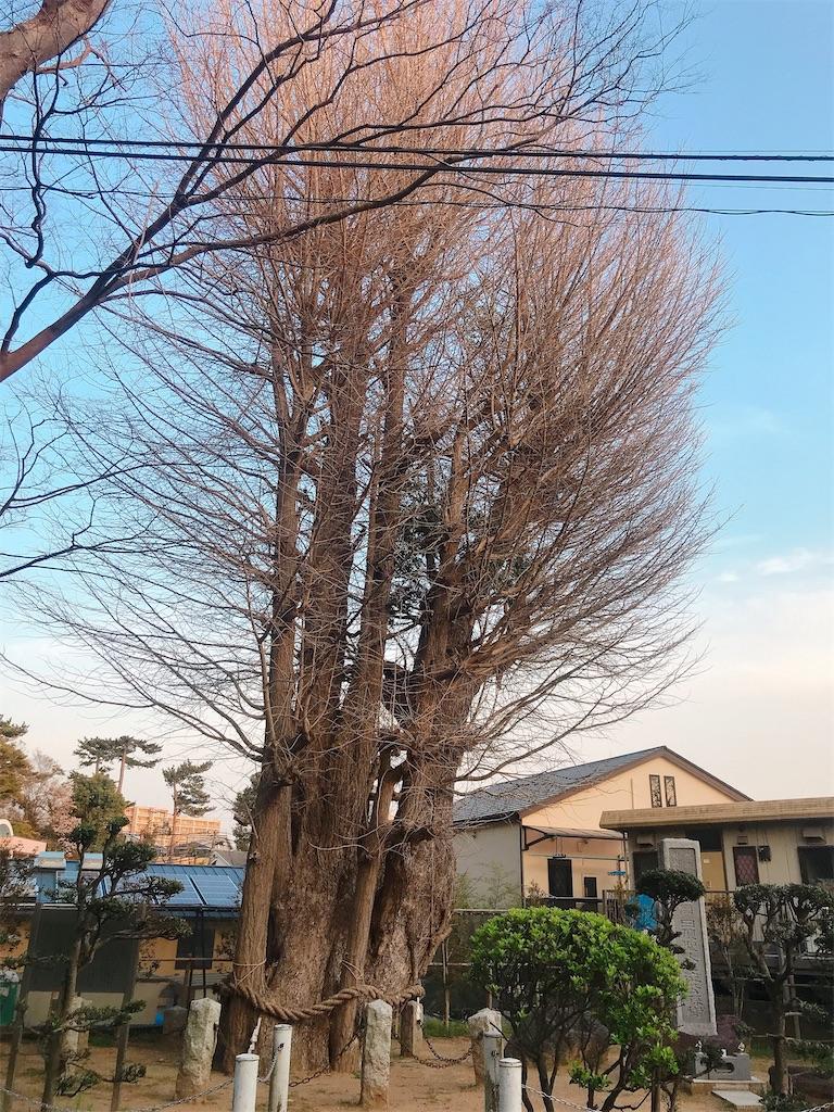 f:id:rei-tokyo:20200322231347j:image