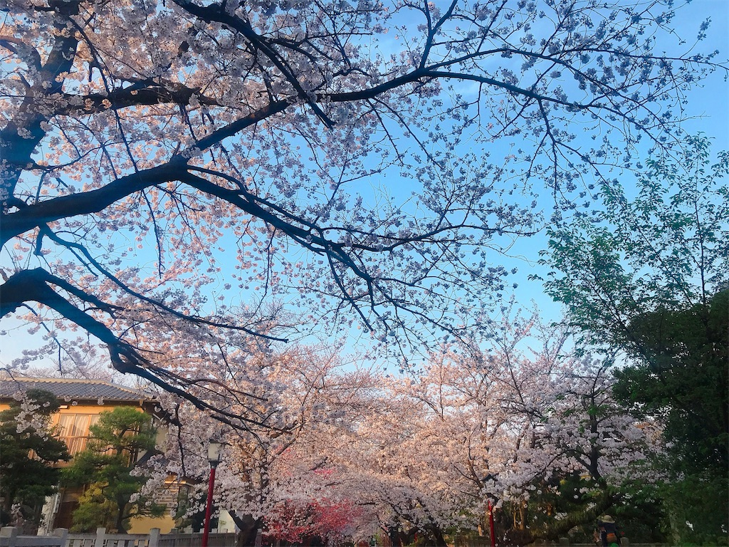 f:id:rei-tokyo:20200322232759j:image