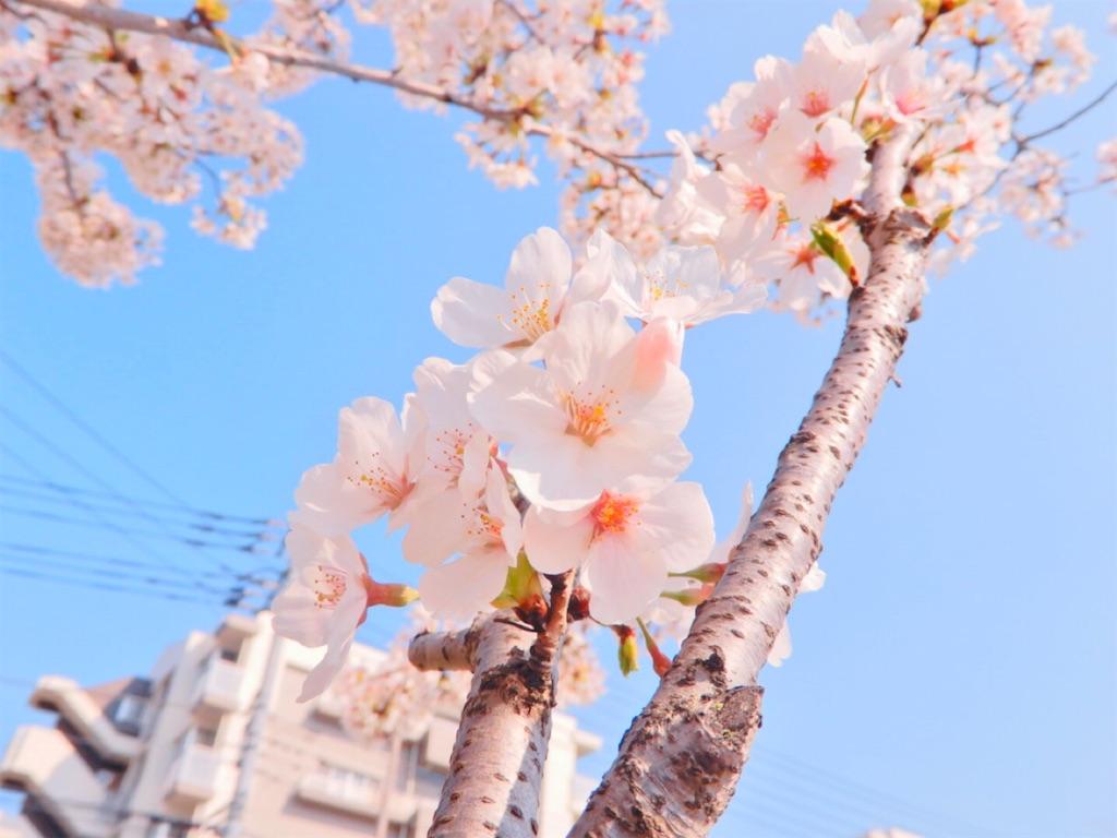 f:id:rei-tokyo:20200410140419j:image