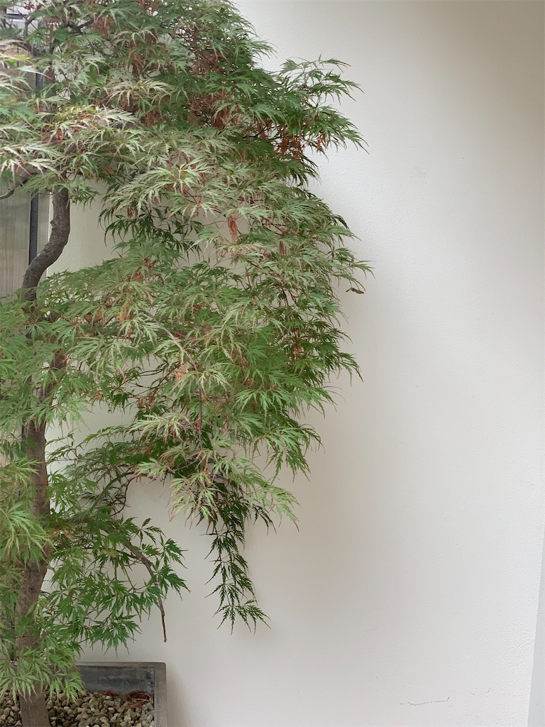 f:id:rei-tokyo:20200615185402j:image