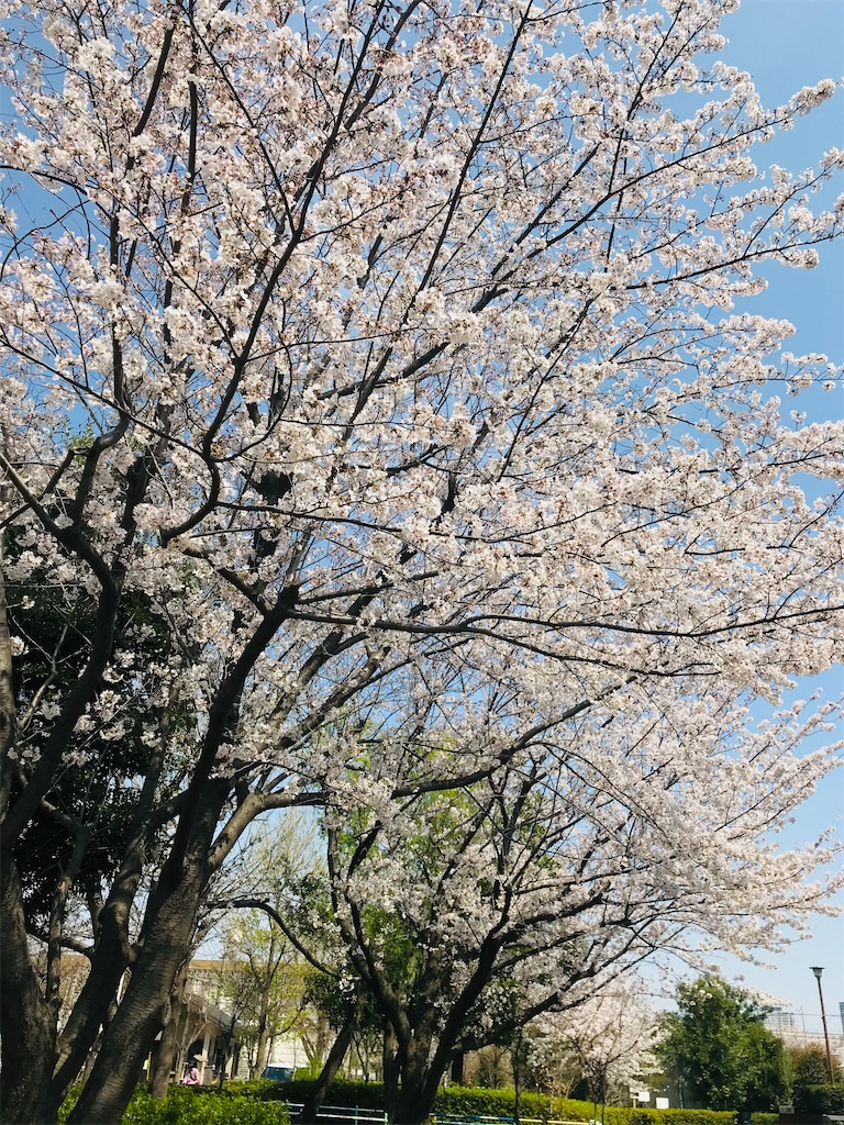 f:id:rei-tokyo:20210329171240j:image