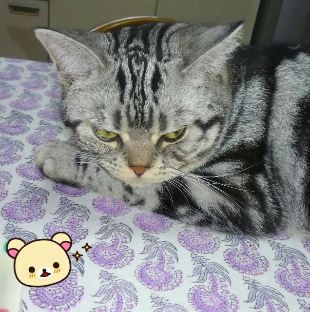 f:id:rei-tsuchiya:20160919001955j:image