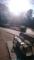 朝の吉祥寺 井の頭公園