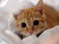 [子猫 猫 猫画像 ネコ画] 子猫画像