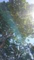 [陽射し 日差し 太陽 太] 鮮やかな陽射し
