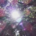 [吉祥寺 井の頭公園 新緑] 吉祥寺、井の頭公園