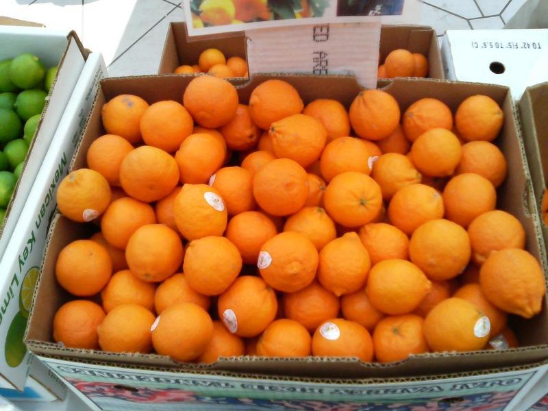 ベイクウォーターでやってた、オレンジ祭り。ピクシーオレンジらし
