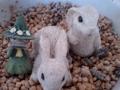 [キャラ] スナフキンとウサギ
