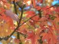 日光 いろは坂の紅葉