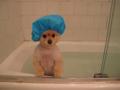 ごめん、入浴中なの