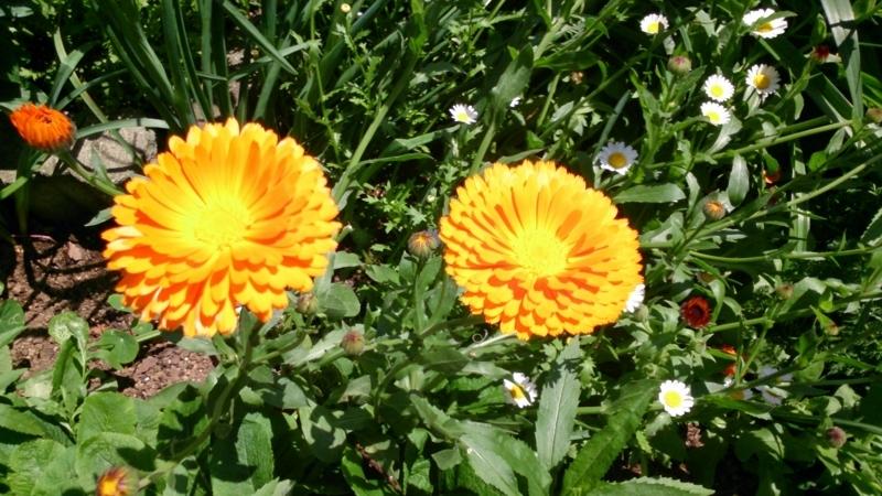 野に咲く花@要塞近郊