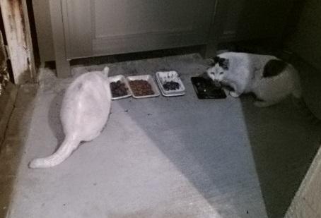 津田沼で見たネコさん