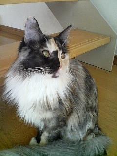 猫カフェ ねこ・ねこ・ねこ2 090129_1506