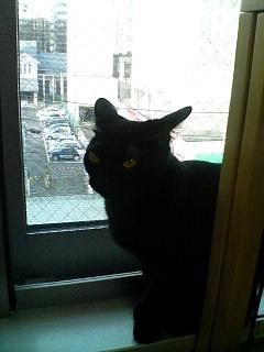 猫カフェ ねこ・ねこ・ねこ3 090129_1511