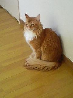 猫カフェ ねこ・ねこ・ねこ5 090129_1516