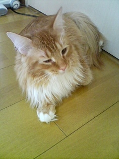 猫カフェ ねこ・ねこ・ねこ6 090129_1519