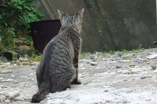 田代島14/20100818