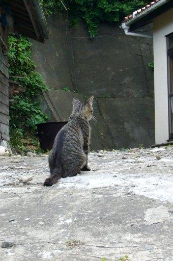 田代島15/20100818 100818_154502 待ち人来たらず