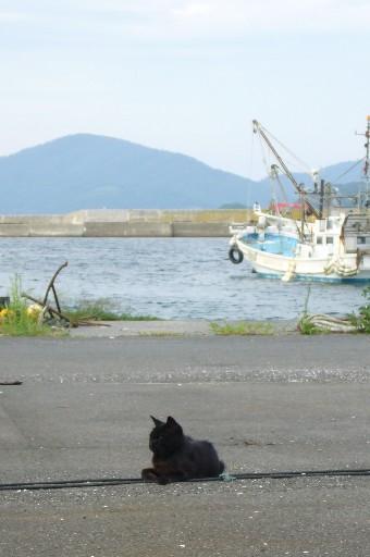 田代島22/20100818 100818_161701 待っています