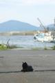 [宮城県]田代島22/20100818 100818_161701 待っています