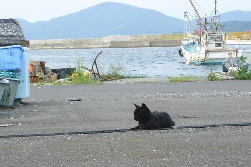 田代島23/20100818 100818_161702 海と黒猫